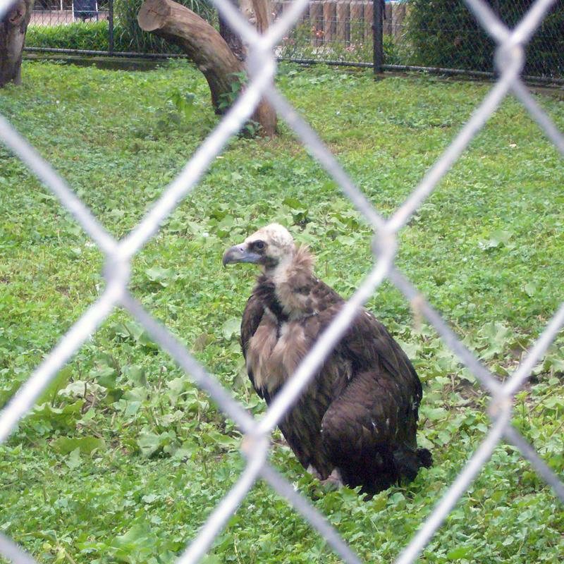 Зоопарк Дрездена